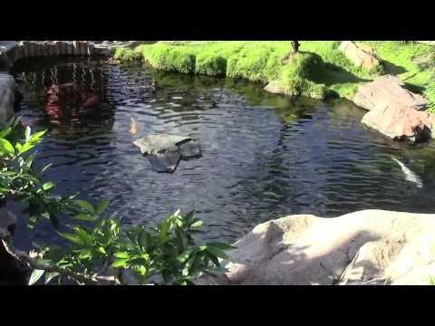 Japanese Garden Epcot World Showcase