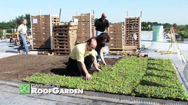 News Flash: Carlisle's Roof Garden