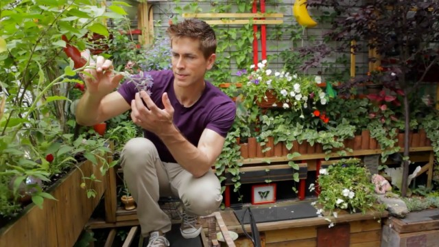 Tiny Williamsburg hipster garden – Urban Gardener video