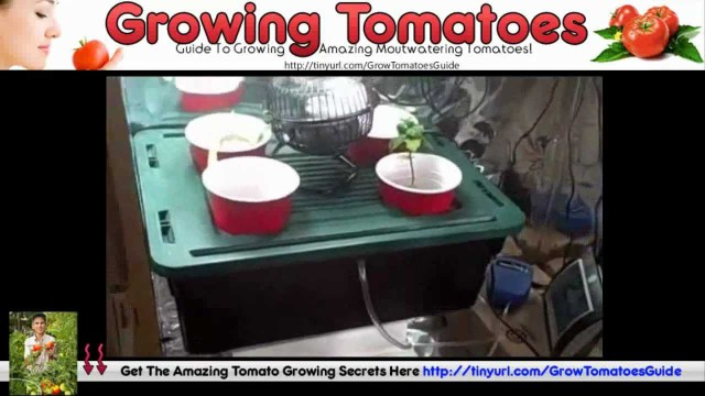 Grow Tomatoes Upside Down – Hanging Tomato Plants