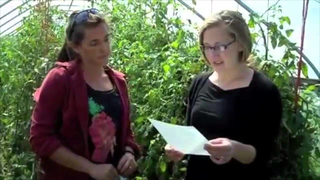 Harvest Lessons: Tomatoes
