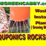 Aquaponics Rocks ( Growing Medium ) Wash Install Plant – $40 Aquaponics – Barrelponics Made Easy