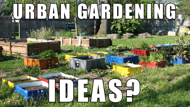 """Urban Gardening Ideas?"" by Epic Gardening"