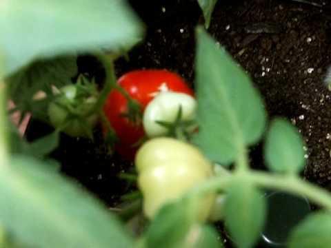 ?????? ?? ??????? 3 (Urban Gardening)