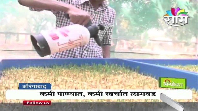 'Mati Vina Sheti' – Hydroponic System- A Unique solution to fodder scarcity