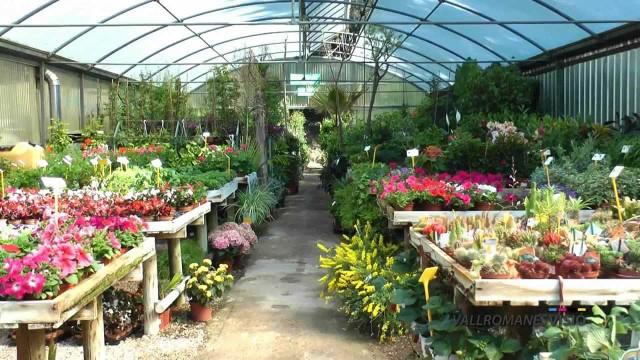 Garden Center  – VallromanesVerd Centro de Jardiner