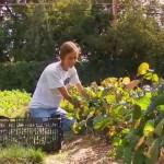 Urban Conversion: Urban Gardening, The White House and Monticello Teaser