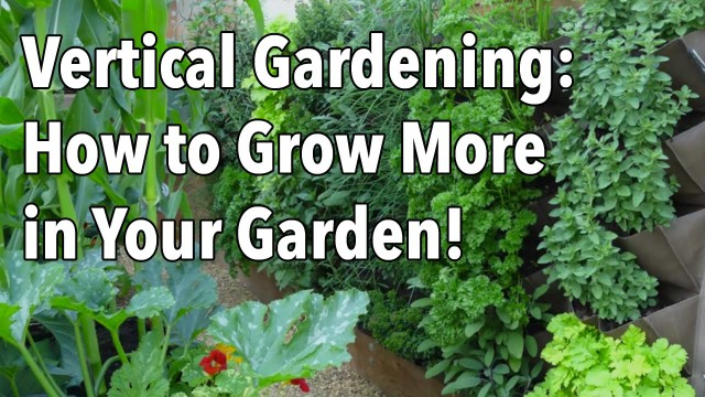 Vertical Gardening – Simple Ideas for a Vertical Vegetable Garden