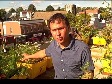 How to Grow an Urban Rooftop Container Vegetable Garden