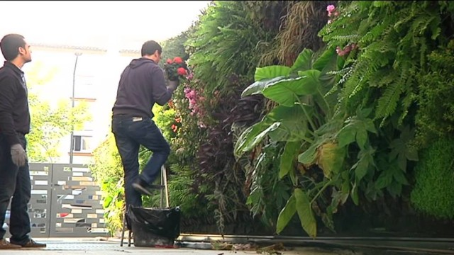 video de Historias de Luz: Terapia Urbana ajardina paredes para combatir s
