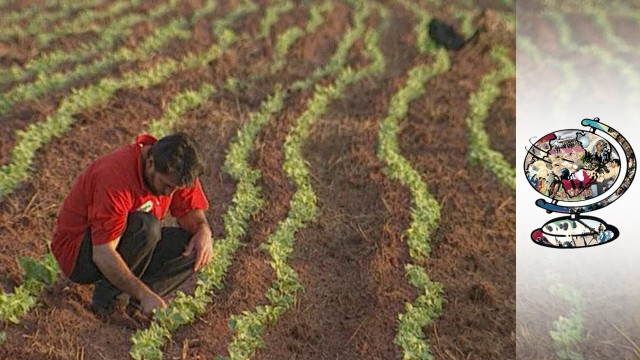 The Farming Movement Changing The Face Of Brazil
