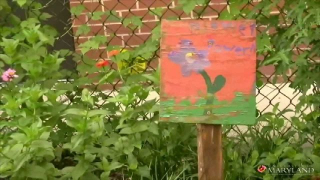 Components of a Successful School Garden