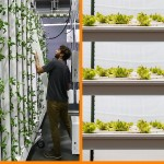 Vertical Farming: Horizontal Plane vs Vertical Plane Production