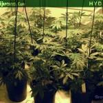Hydroponics – Hydroponic Marijuana Growing – Hydro Weed Grow How To – 16