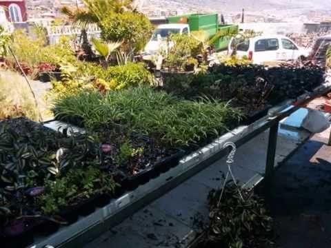 How to make a lattice vertical garden the home depot for Curso jardineria