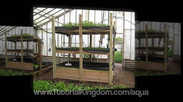 Aquaponic Design – 7 Benefits of Aquaponic Gardening
