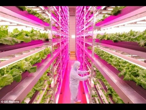 World's first robot FARM –  replace humans with machines in its lettuce factories