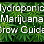 Marijuana Legalization – Marijuana Hydroponics Grow Guide – Grow Top Quality Marijuana
