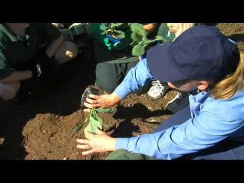 'Kids Veggies'  Hunter Valley Gardens – DIY Gardening Tips (EP2)