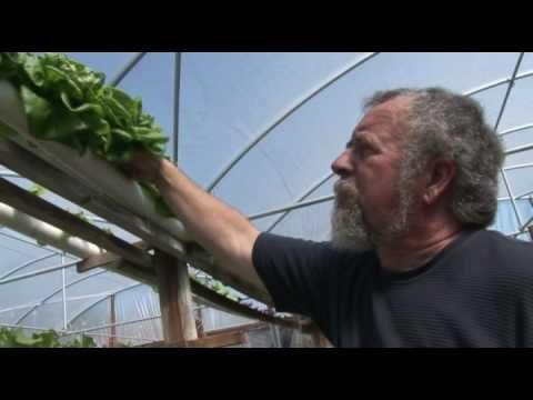 Hydroponic Farming  Micco Florida