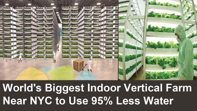 worlds largest indoor vertical - photo #15