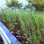Green Roofs for Healthy Cities, Spectacular Sustainable Homes