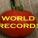 Quest For The World's Largest Hydroponic Tomato: How To Clone Tomato Plants