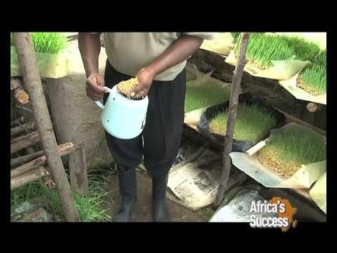 Farmers adopt hydroponics