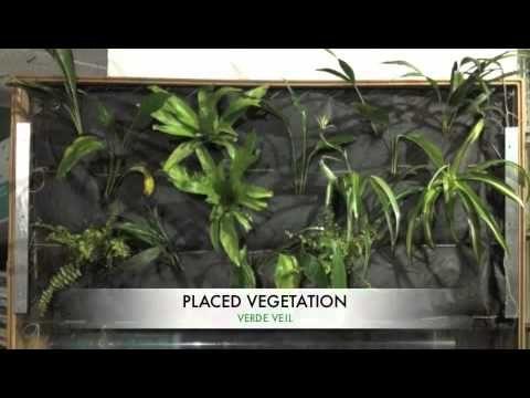 DIY Indoor Green Wall – Verde Veil