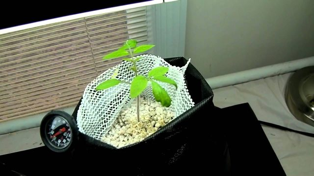 Plain 2 Grow System The Best Passive Hydroponic Version 4 FINAL Upgrade! Let's Grow!