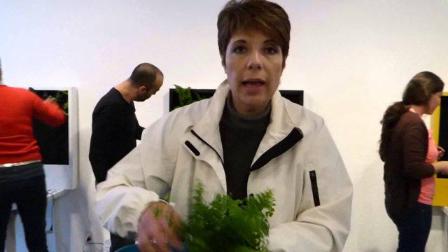 Curso de Jardinería Vertical en México (5)
