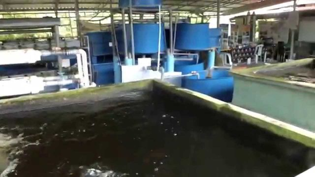 Fish Farming  Using Indoor RAS-www.stac.com.my