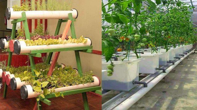 Gardening video forum video forum about gardening for Unique vegetable garden designs