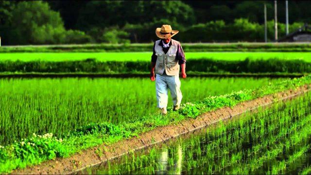 Vertikale Bauernhöfe – FUTURE – ARTE