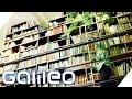 Vertikale Gärten | Galileo | ProSieben