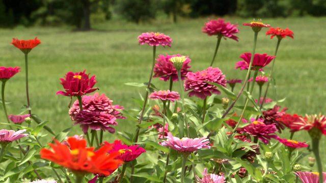 Southern Region Master Gardener Conference 2014  (Consumer Horticulture Specialist Dan Gill)