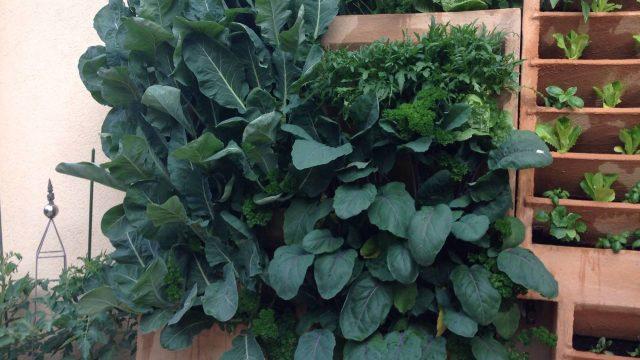 vertical garden for urban farmers