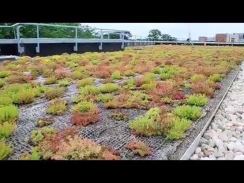 Green Roofs – Science Nation