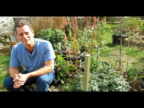 Show What You Grow (E1): 5 Vegetable Gardening Tips,  Contest Winners & Bloopers