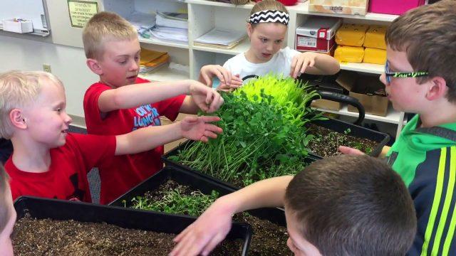 Altmayer School Gardening