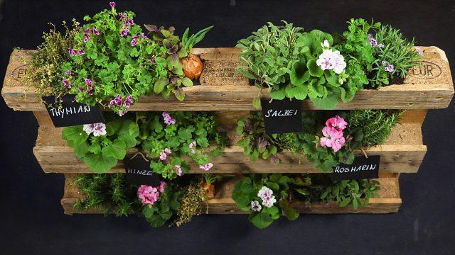 BLUME 2000 – Einfach Machen: Urban-Gardening mit Europalette