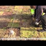 How to install a green roof using Wallbarn M Tray clip system