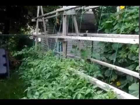 Profitable vertical farming