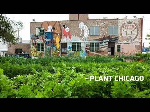 Plant Chicago | A PrimePay Client Story