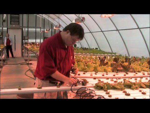 Hydroponic Lettuce at Cape Abilities Farm