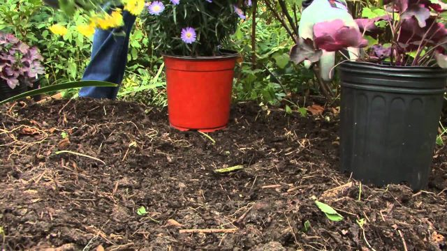 Planting Perennials in the Fall with BLACK+DECKER