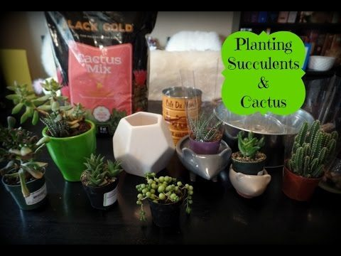 Planting Succulents & Cactus – Indoor Gardening