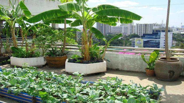 Inspiring Roof Top Garden Designs Ideas