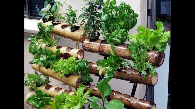 DIY vertical garden design ideas 2017