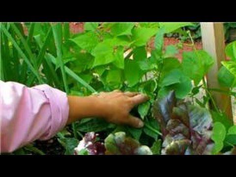 Vegetable Gardening : Vegetables to Grow in a Summer Garden
